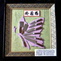 Decorative Mini Knives, Western, 9 Pieces