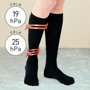 [cecile] Cotton Blend Compression 5-Toe High Socks (Asis Kit) / New Arrival Summer 2020, Inner
